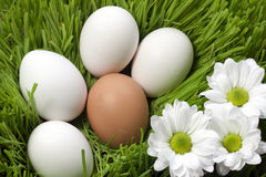 Eggs ecological Stock Photo