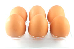 Eggs in an egg box. Brown eggs in an egg white box Royalty Free Stock Images