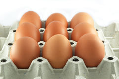 Eggs in egg box Stock Images