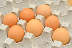 7 Eggs in egg box Stock Images