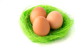 Eggs. Egg on green grass with white isolated background royalty free stock photography