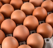Eggs and egg laying block paper Royalty Free Stock Images