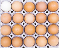 Eggs. Egg in Package grid protect from brocken Royalty Free Stock Images