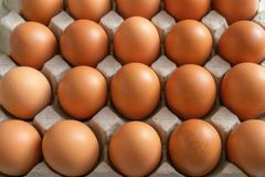 Eggs in the egg tray royalty free stock photo