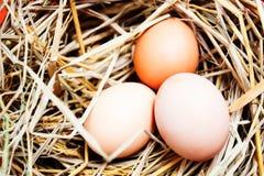 Eggs on eggs background. 3 eggs on eggs background Stock Image