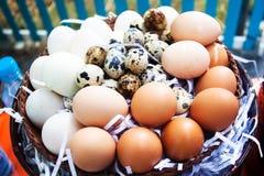 Eggs on eggs background. Animal food Stock Photos