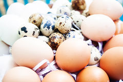 Eggs on eggs background. Raw food Stock Photography