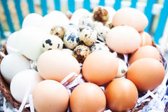 Eggs on eggs background. Value food Royalty Free Stock Images