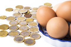 Eggs with euro coins money in basket on white royalty free stock photo
