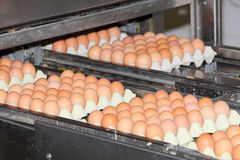 Eggs in factory Royalty Free Stock Photography