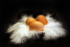Eggs on Feather 1. Three brown eggs on feather Stock Photo