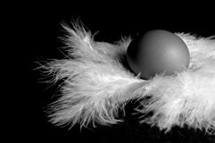 Eggs on Feather 5. One egg on feathers stock image