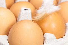 Eggs with a feather in an egg box Stock Photography