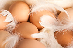 Eggs and feathers Royalty Free Stock Photos