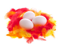 Eggs on feathers Royalty Free Stock Photos