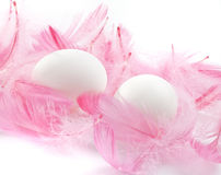 Eggs feathers Royalty Free Stock Photography