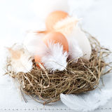 Eggs and Feathers in a Easter Nest Stock Image