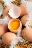 Eggs and feathers at hay Royalty Free Stock Image