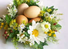 Eggs in floral nest. A view of four eggs resting in a colorful nest of white and yellow flowers stock images