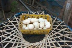 Eggs. Food,eggs,wood,fresh,white Royalty Free Stock Image