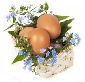 Eggs and forget-me-nots Stock Image