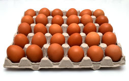 Eggs in formwork Stock Photography
