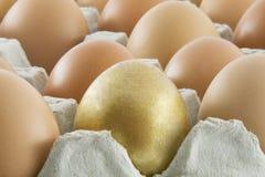 eggs frais on ruraux Image libre de droits