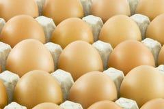 eggs frais on ruraux Images libres de droits
