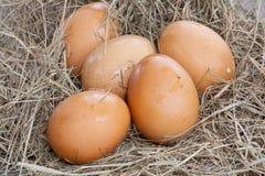 Eggs, fresh eggs, eggs on farm. Eggs, fresh eggs, farm, eggs on straw Stock Photos