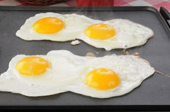 Eggs frying on the griddle. Four eggs frying on a non stick griddle with steam coming up Royalty Free Stock Images