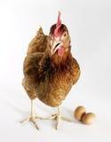 Eggs a galinha. foto de stock royalty free