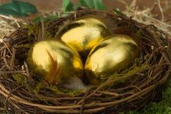 Eggs of gold Stock Photos