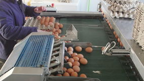 Eggs grading by weight and packaging production line at chicken farm stock footage