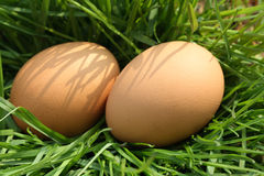 Eggs In Grass Royalty Free Stock Photo