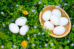 Eggs on grass Stock Photography