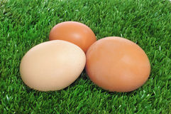 Eggs on the grass Royalty Free Stock Images
