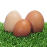 Eggs on the grass Stock Images