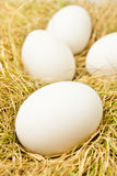 Eggs on grass Royalty Free Stock Photography