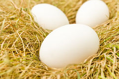 Eggs on grass Stock Image