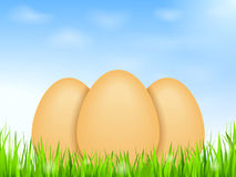 Eggs in grass Stock Photography
