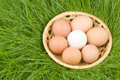 Eggs & grass Stock Photo