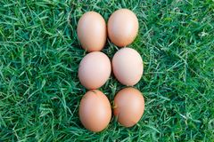 Eggs are on the grass detail Stock Photography