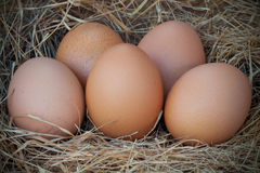 Eggs on grass in the farm Royalty Free Stock Photo