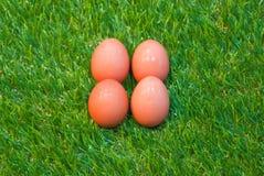 Eggs on grass Stock Photos