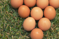 Eggs on the grass Royalty Free Stock Image