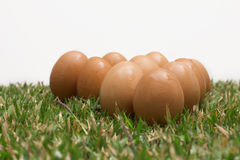 Eggs on the grass Stock Image