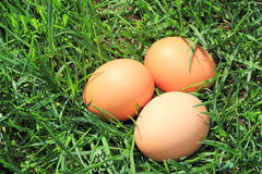 Eggs in the grass. Isolated on a green background Stock Image