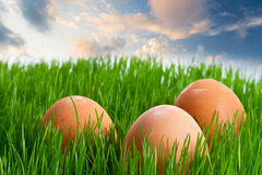 Eggs in the grass over blue sky Royalty Free Stock Photography
