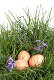 Eggs in grass with spring flower. Broken eggs in grass with spring flower stock images