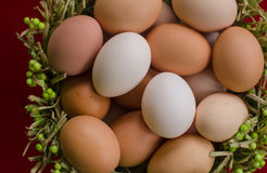 Eggs in the green basket close Stock Images